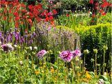 Fat Cat Gardens more flowers