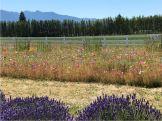 Front Garden at Washington Inn and Lavender Farm